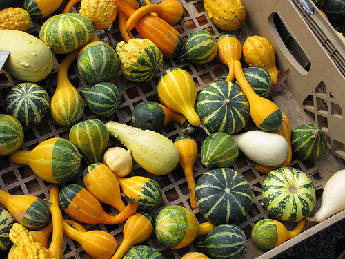 Top down view of gourds in a wooden bin | Foodal