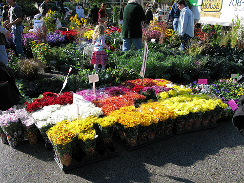 Flowers being sold at a farmers market | Foodal