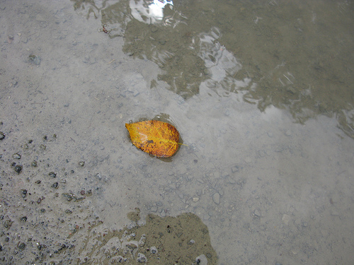 An image of a single brown leaf floating on a shallow pool of water.