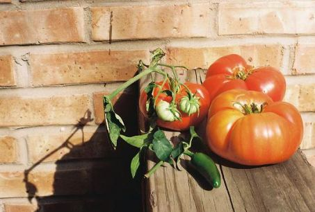 An image of beautifully ripe tomatoes on a wooden table against a brick wall.