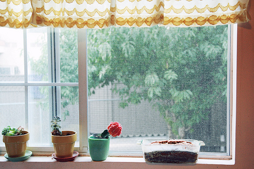 An image of a kitchen window with flower pots and baked bread cooling on the windowsill.