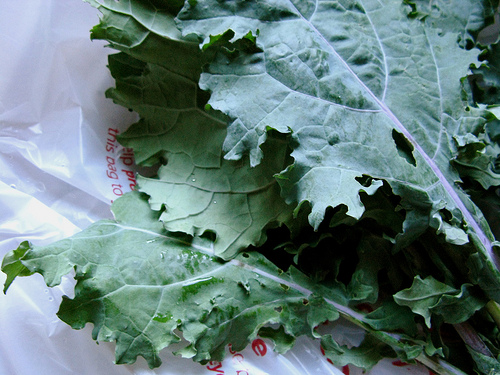 An image of fresh kale leaves, still in its packaging.