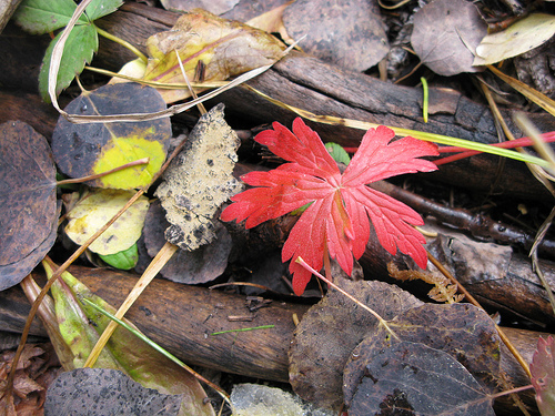 Image of autumn leaves and twigs strewn on the ground.