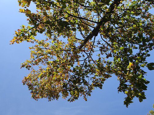 View of a treetop with the clear blue skies at the back.
