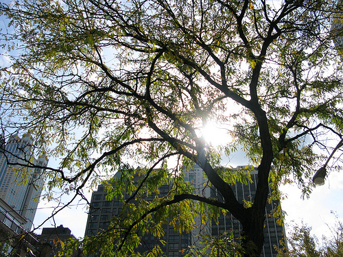 An image of a city skyscraper through the branches of a tree.