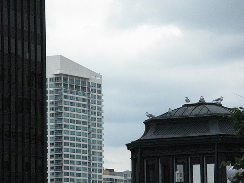 A skyline view of the the city, with various images of skyscrapers.
