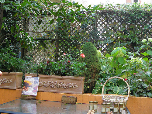 A lovely backyard garden with an old lattice fence at the back.