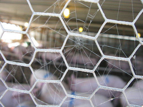 A cobweb on a metal wired fence.