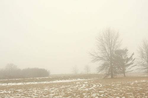 A foggy field in a the countryside.