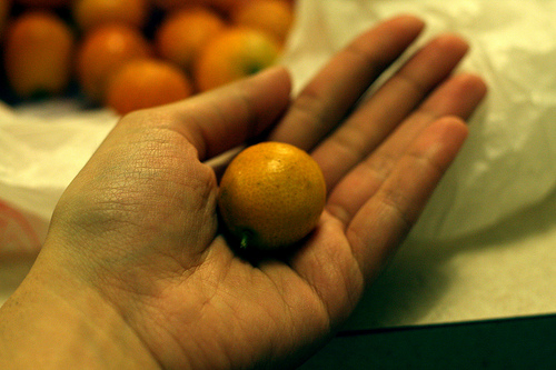 An image of a hand holding a kumquat.