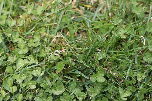 A close up image of green grass.