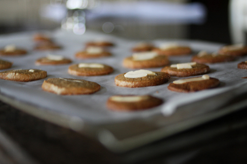 Lined round spiced cookies on top of a tray.