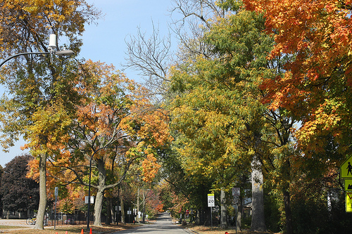 An image of trees lined along the road, with changing colors of autumn.