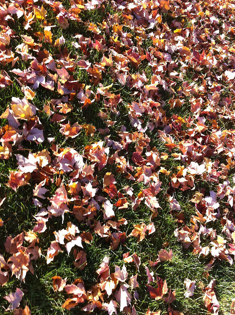 Ground filled with autumn leaves.