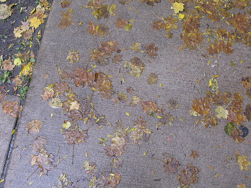 A cemented pavement with scattered autumn leaves.