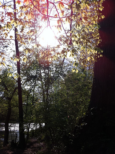 An image of sunlight peeking through a canopy of tall trees.