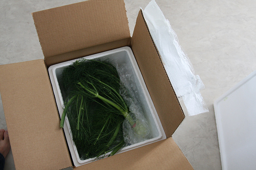 An image of a box filled with fennel leaves.