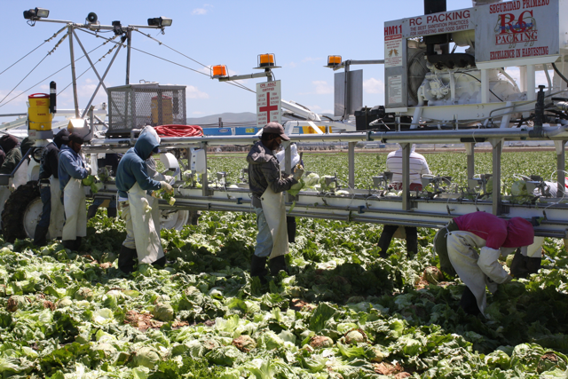 dole lettuce fields