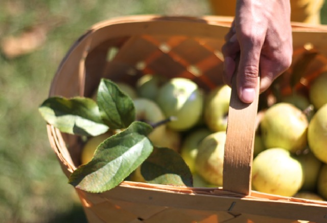 basket of apples | FoodLovesWriting.com