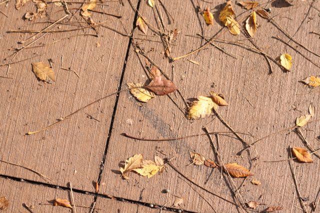 leaves | foodloveswriting.com