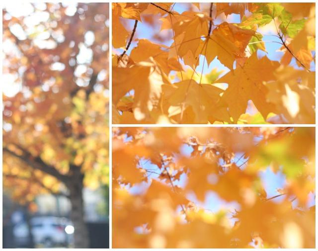 fall leaves | foodloveswriting.com