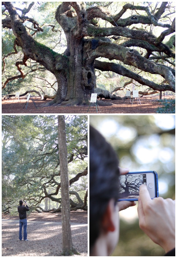 Angel Oak | FoodLovesWriting.com