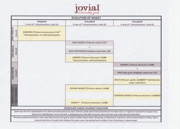 Jovial Foods einkorn chart