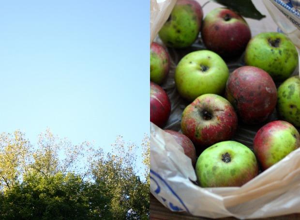 sky-apples