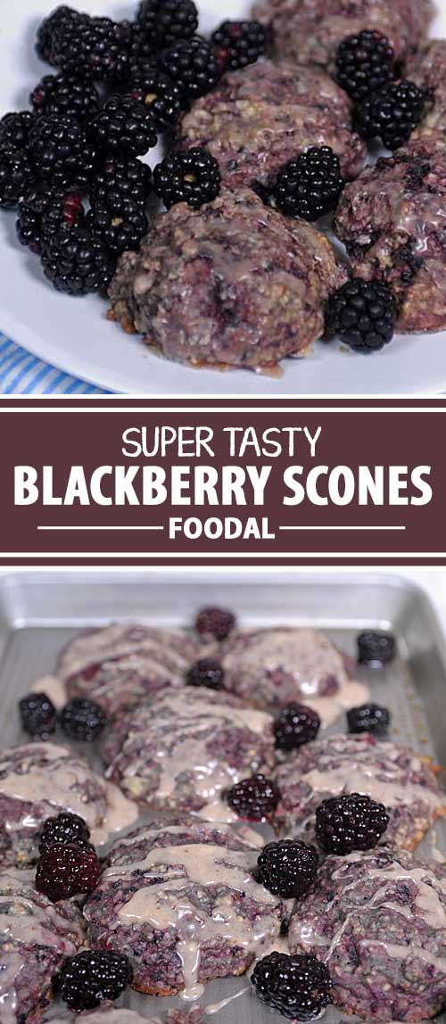Bake these delicious blackberry scones for breakfast, brunch, or coffee time! These serve equally well for breakfast for the kiddos or for a boardroom meeting. And the ingredients are wholesome and nutritious. Quick and easy to to make too!