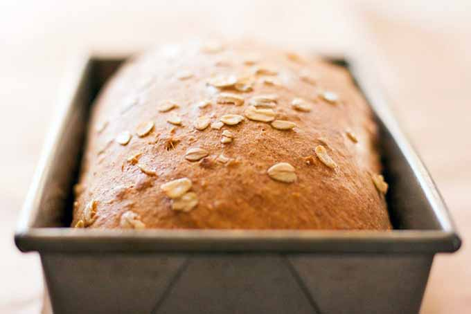 Closeup of a golden brown just-baked loaf of bread topped with oats, in a metal pan, on a wood background.