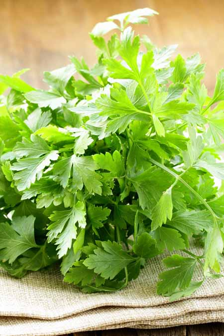 How to Cook With Parsley | Foodal.com