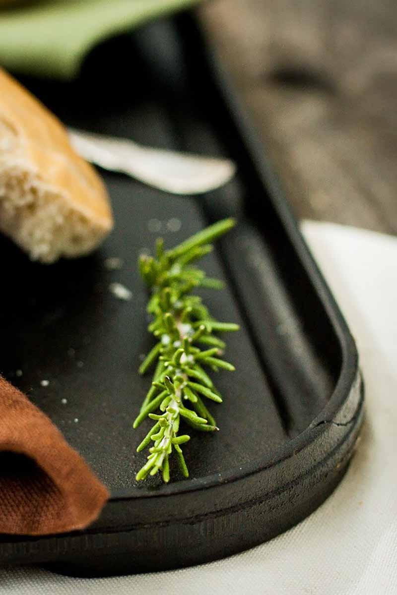 Vertical image of a fresh rosemary sprig on a dark platter.