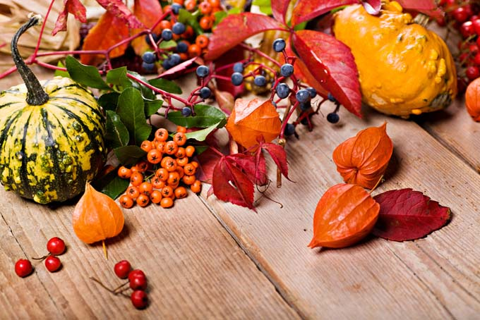 Various gourds, berries, and fall leaves strewn across rustic wooden table
