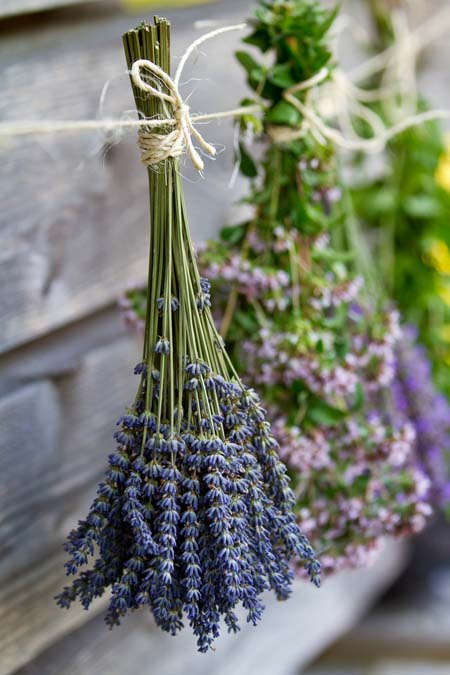 Herbs hung out to dry   Foodal