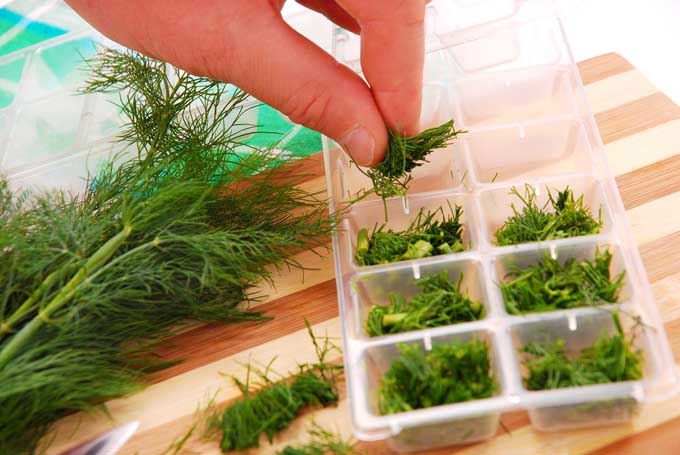 Freezing herbs in ice cube tray   Foodal
