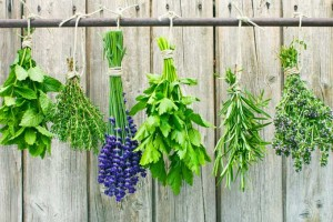 How to Preserve Your Herbs