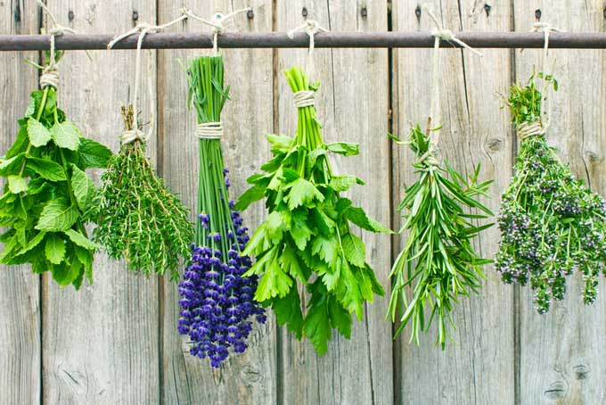 How to Preserve Herbs   Foodal