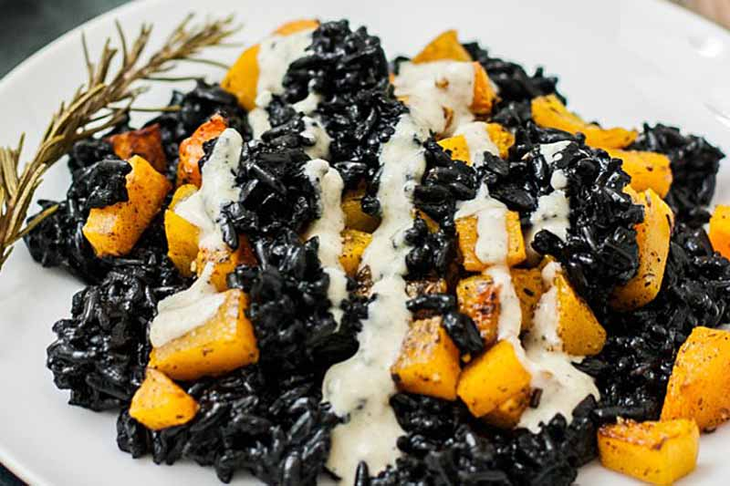 Close up of a roasted butternut squash with black rice and hemp seed and miso dressing.