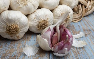 The Cooking and Health Benefits of Garlic - Foodal.com