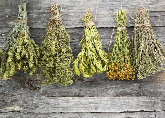 Drying Herbs | Foodal.com