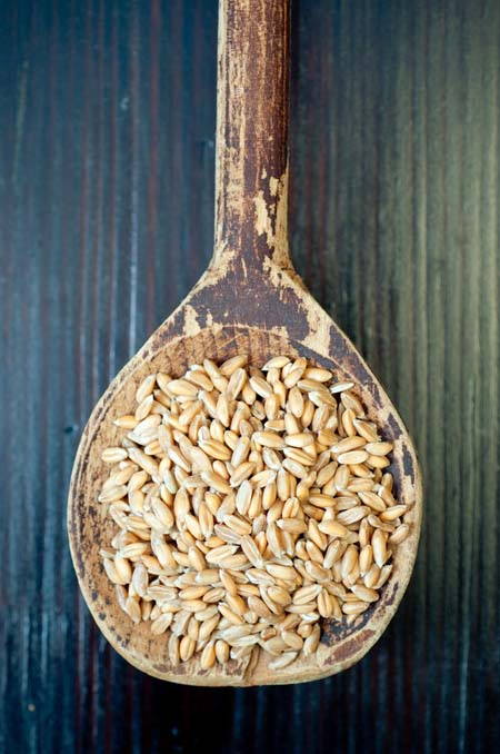 Related to the wheat plant, spelt is naturally high in fiber, and an excellent source of protein. Because of its rich nutrient content and active ingredients, spelt makes an excellent dietary base for those recovering from illness. https://foodal.com/knowledge/paleo/spelt-remedies-fields/
