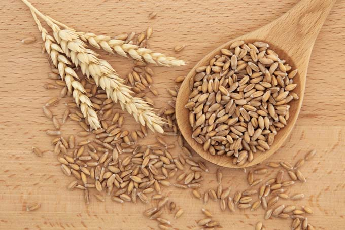 Spelt - natural remedies from the field | Foodal.com