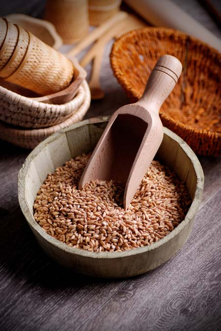 Rich in nutrients and high in fiber, spelt makes an excellent alternative to wheat. http://foodal.com/knowledge/paleo/spelt-remedies-fields/
