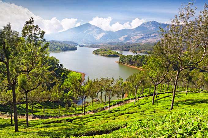 Darjeeling Plantation | Foodal.com