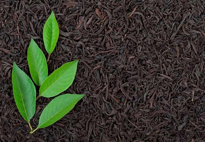 Selecting the Very Best Black Tea | Foodal.com