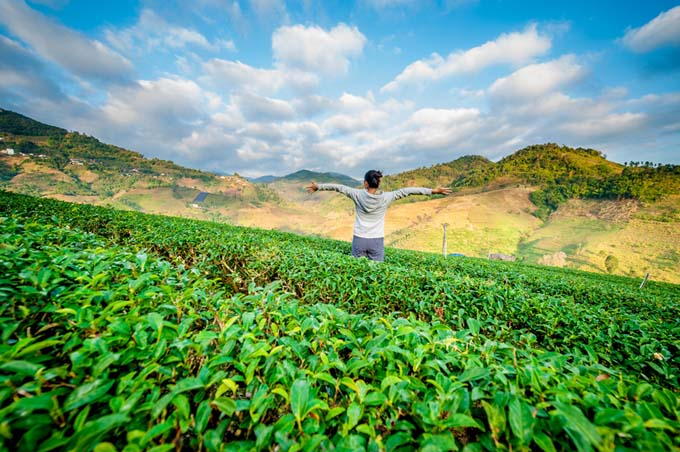 Tea Field in China | Foodal.com