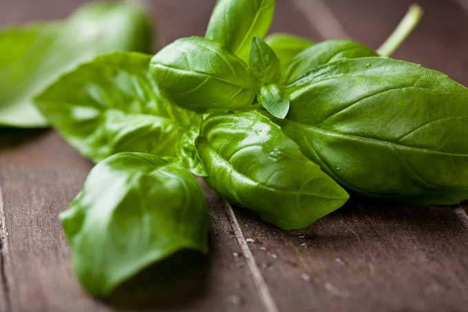 Cooking with Different Types of Basil | Foodal.com
