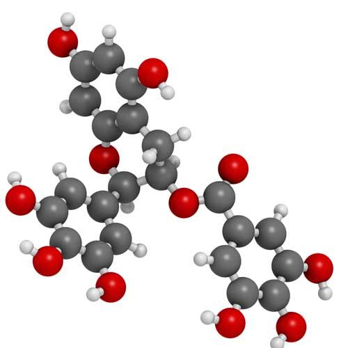Epigallocatechin Gallate EGCG molecule