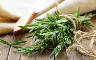 The Ultimate Guide to Rosemary