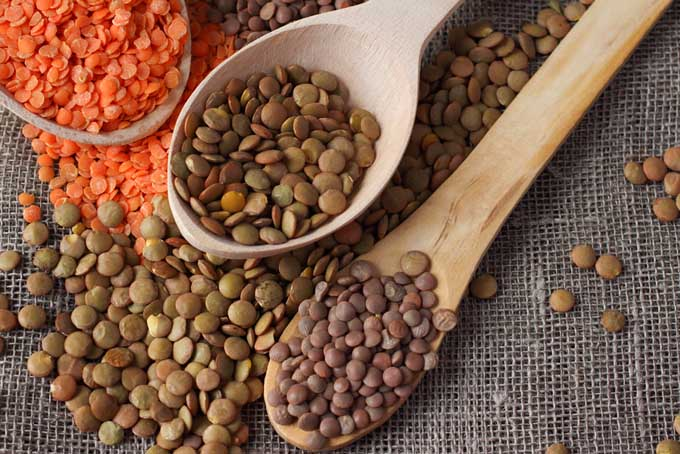 Lentils, an Alternative to Soy | Foodal.com